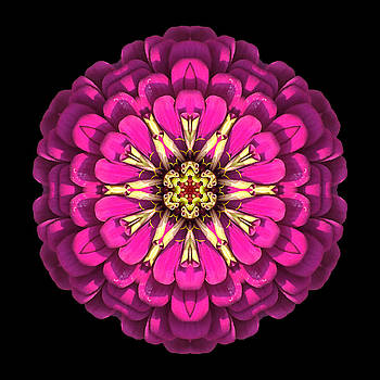 Violet Zinnia Elegans Flower Mandala by David J Bookbinder