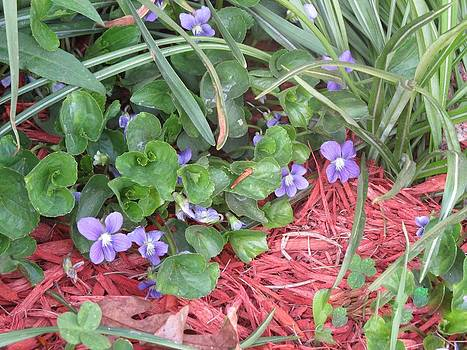 Violets by Diane Mitchell