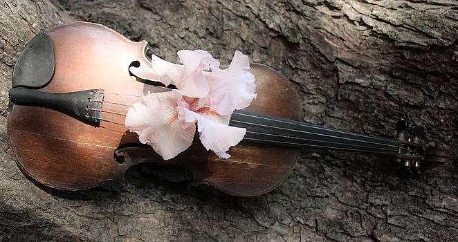 Violin Beauty by Janet Wagstaff