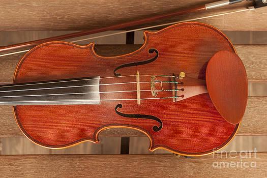 Violin by Cynthia Holling-Morris