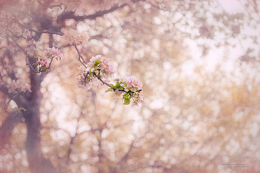 Visions of Spring by Dustin Abbott