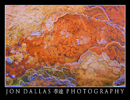 Visual Coral by Jon Dallas