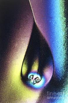 Perennou Nuridsany - Vitamin C Crystals