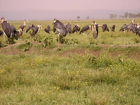 Shesh Tantry - Vultures
