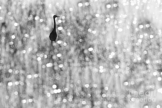 Dan Friend - Wading bird in marsh
