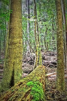 Waihou Spring Forest by DJ Florek
