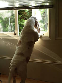Debi Ling - Waiting by the window