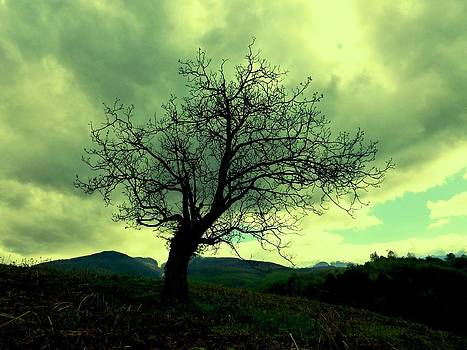 Waiting for spring by Rumiana Nikolova