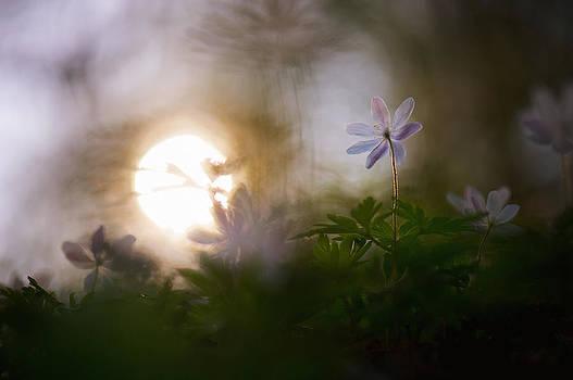 Waiting for the Sun by Sarah-fiona  Helme
