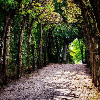 Hannes Cmarits - walk through the first days of fall
