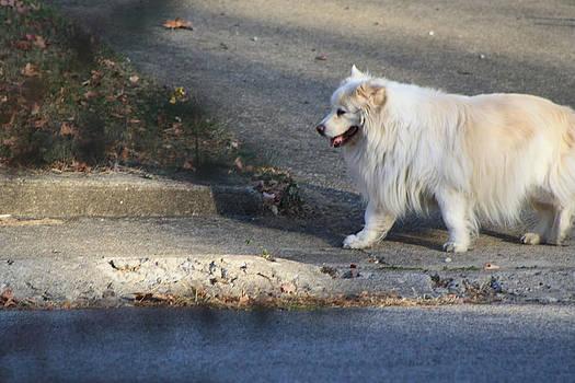 Walking Dog by Michele Wilson