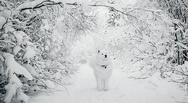 Walking in a Winter Wonderland by Valerie Pond