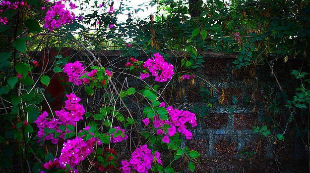 Wall Flowers by Cindy Bray