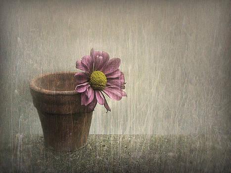 Wallflower by Jennifer Woodward