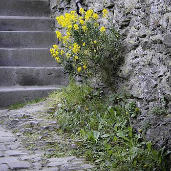 Teresa Mucha - Wallflowers at Marksburg Castle
