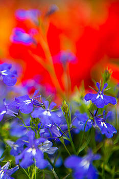 Warm and Cool Spring Flowers by Courtney DeGregorio