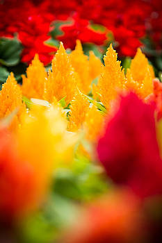Warm Spring Flowers - High Contrast by Courtney DeGregorio