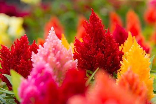 Warm Spring Flowers by Courtney DeGregorio