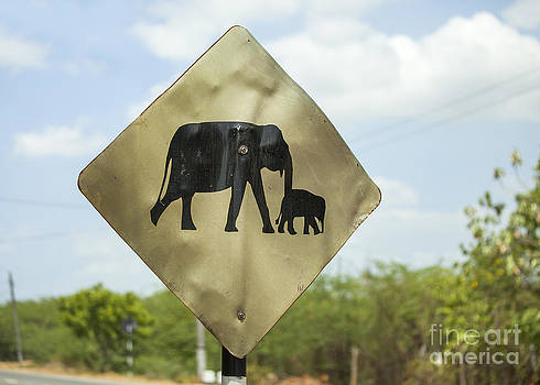 Patricia Hofmeester - Warning sign for elephants on the road