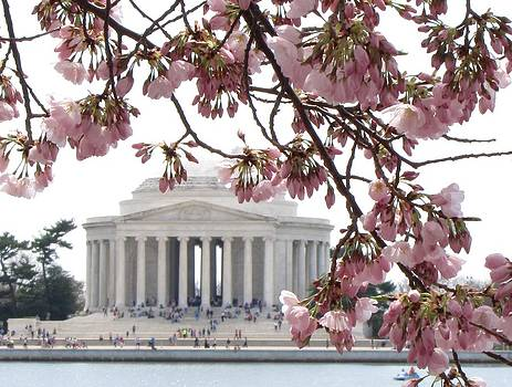 Washington DC in Bloom by Jennifer Wheatley Wolf