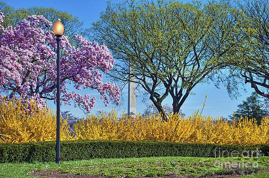 David  Zanzinger - Washington Monument Washington DC