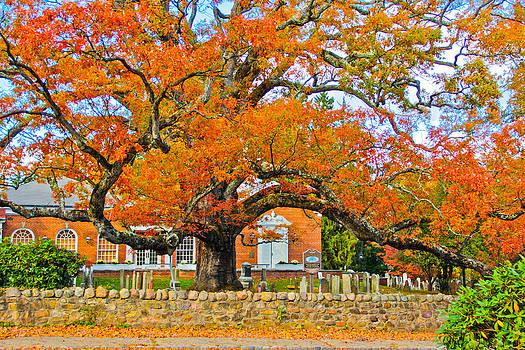 Washington Oak by Graham Hayward