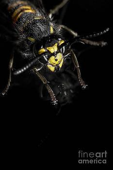 Wasp by Ann-Charlotte Fjaerevik