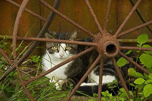 Watch Cat by Chris Burke