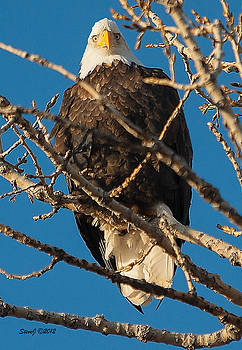 Watching Me Closely by Stephen  Johnson