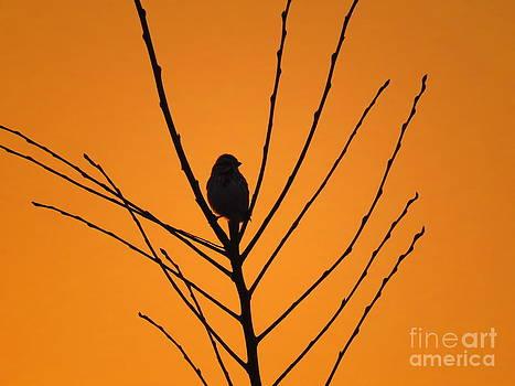 Watching the Sunset by David Lankton