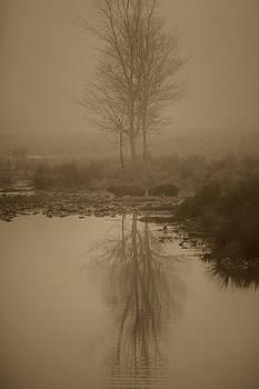 Water Buffalo Morning Fog by Frank Feliciano