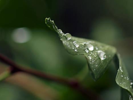 Water Drop 2 by Robert Gaughan