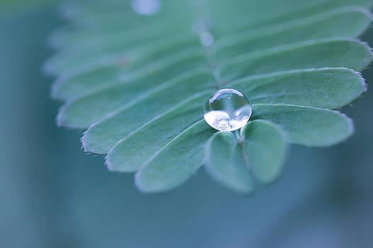 Water Drop by Kam Chuen Dung