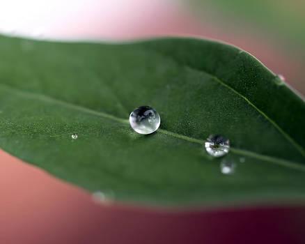 Water Drop by Robert Gaughan