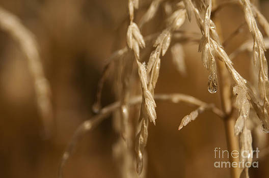 Water droplet by Cynthia Holling-Morris