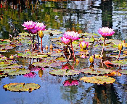 Marty Koch - Water Flower 1002
