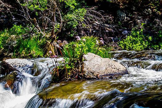 Water Garden by Brian Williamson