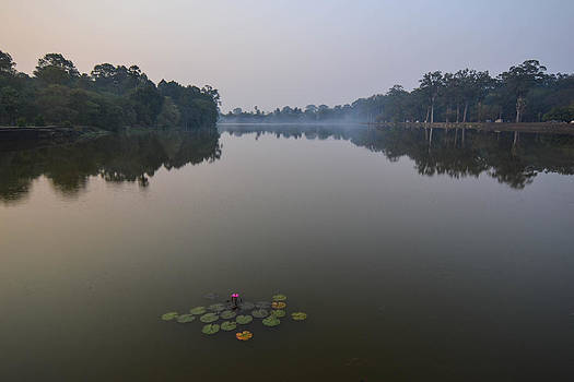Water Lilies at Dawn by Bill Mock