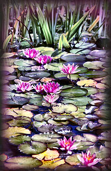 Water Lilies by Sally Bauer