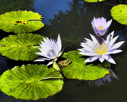 Water Lilies with Frog by Donna Haggerty