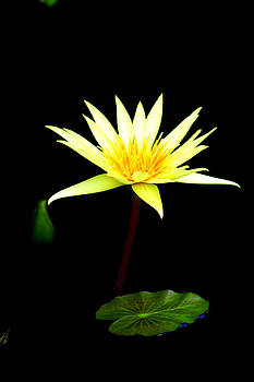 Water Lilly by Doug Hoover