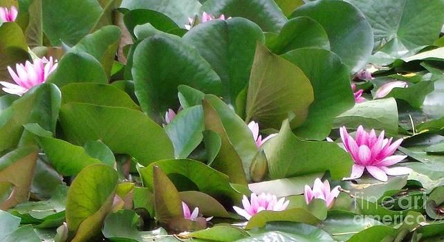 Gail Matthews - Water Lily