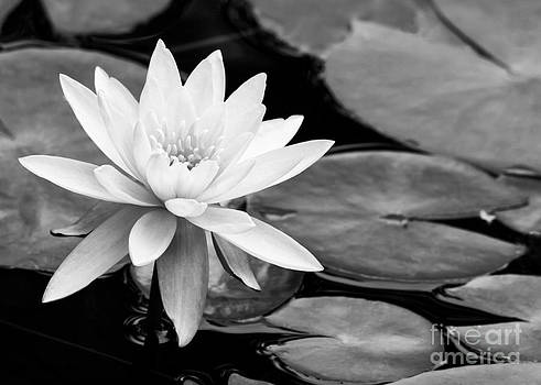 Sabrina L Ryan - Water Lily in the Lily Pond
