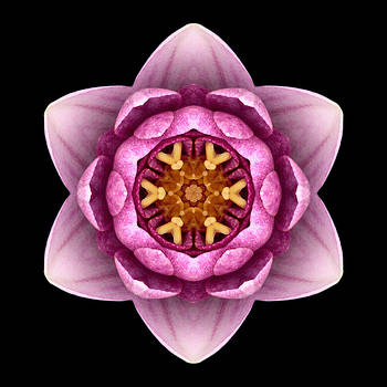 Water Lily X Flower Mandala by David J Bookbinder