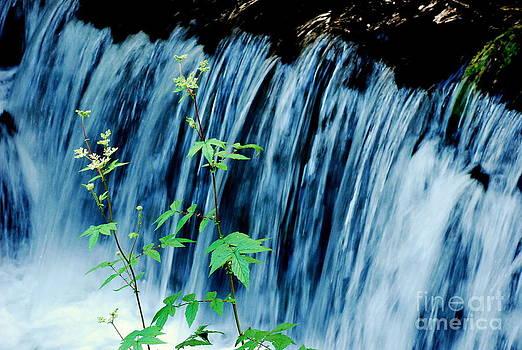 Joe Cashin - Waterfall