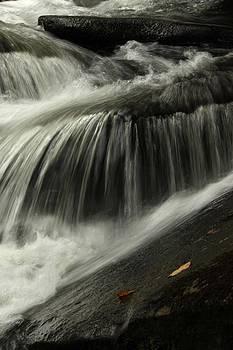 Waterfall Leaf  by AR Annahita