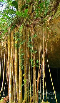 John Malone - Waterfall of Jungle Tree Roots
