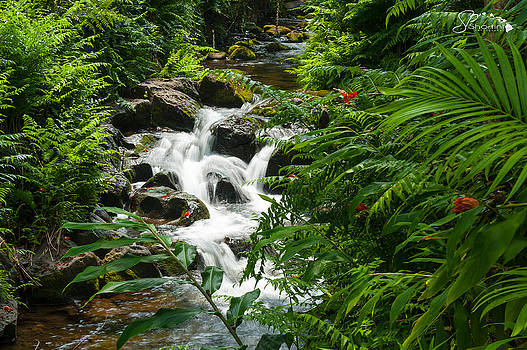 Waterfalls by Kirk Shorte