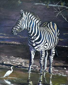 Waterhole Zebra by Robert Teeling