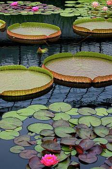 Byron Varvarigos - Waterlilies and Platters 2
